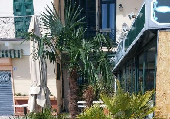 Nuove palme in Passeggiata Grollero