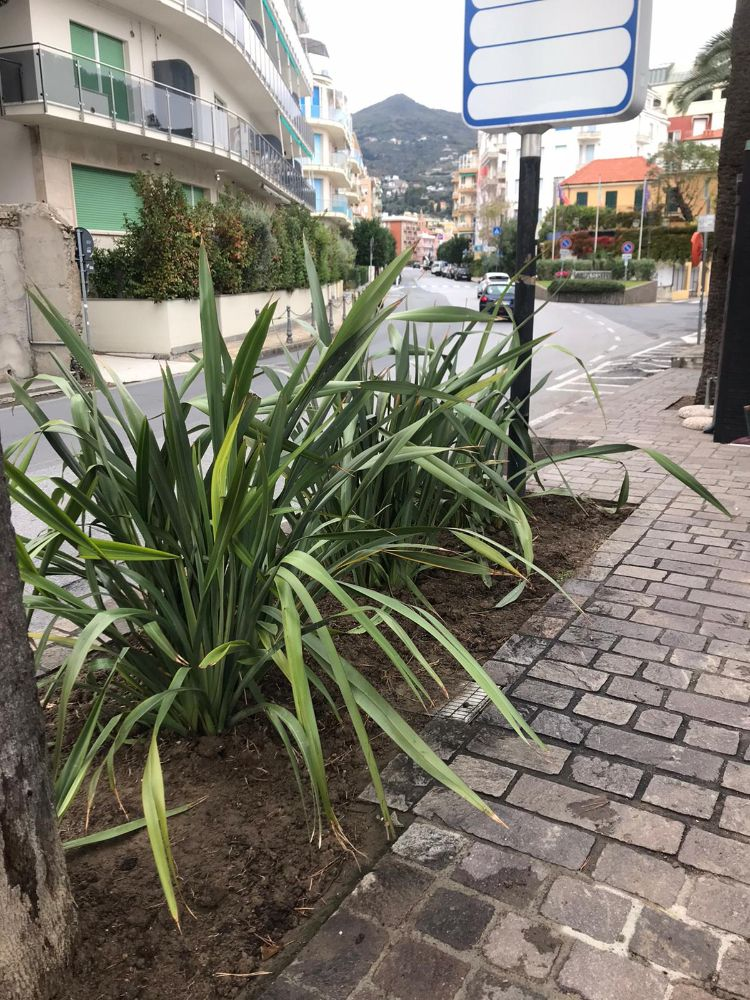 Nella Giornata dell'Albero, due nuove piante per Parco San Rocco