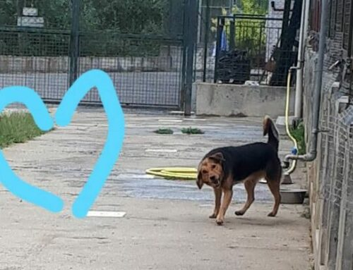 A Villa Fiske due nuove aree sgambamento cani